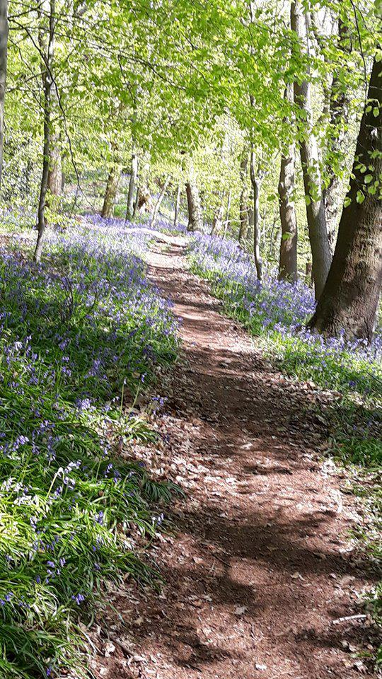 Bluebell Counselling - A place to be heard